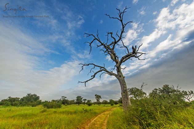 Leaded trees at Singita Kruger National Park