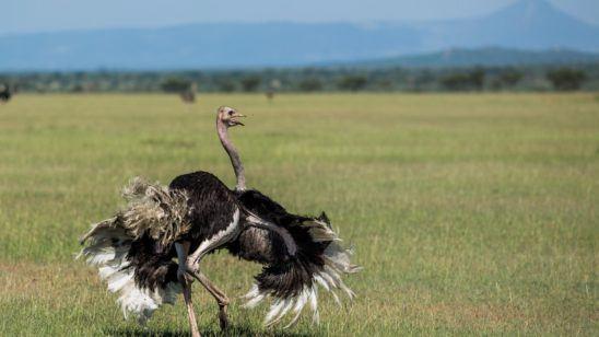 Serengeti Green Season